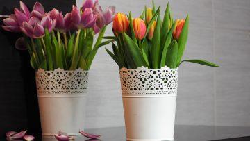 3 tanie sposoby, żeby cięte kwiaty stały dłużej