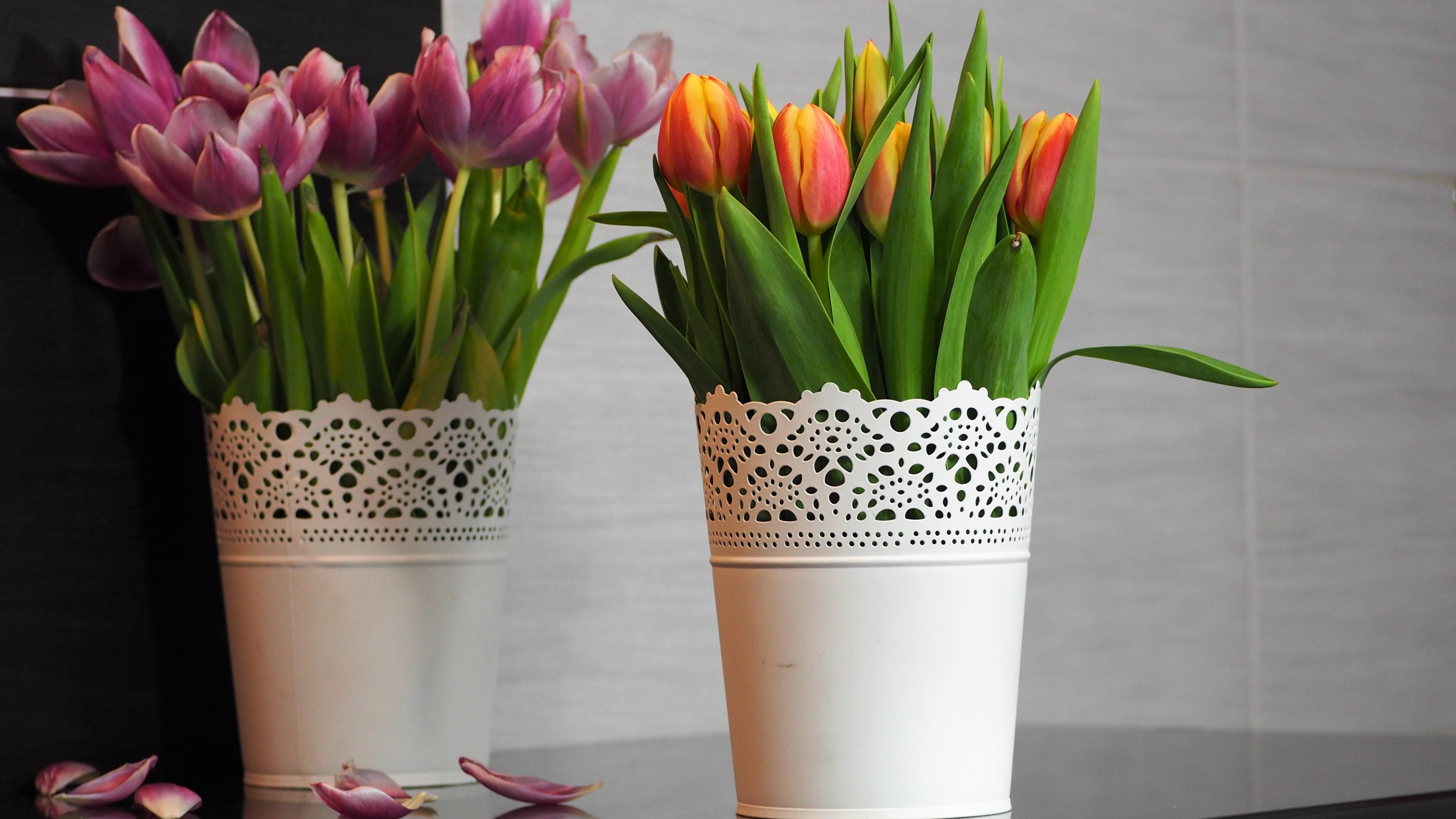 3 Tanie I Zaskakujaco Proste Sposoby Zeby Ciete Kwiaty Staly Dluzej Szalonooka Pl